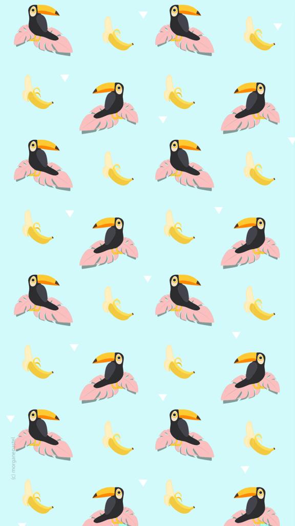 wallpaper summer toucan